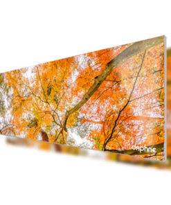Arboles hojas naranjas