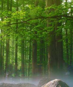 Diseño bosque húmedo