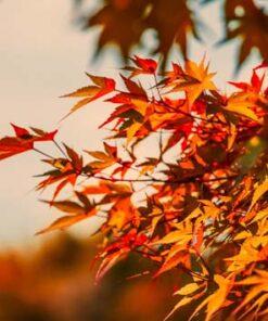 Diseño otoño